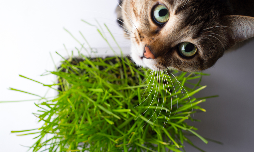 Best houseplants for your curious cat