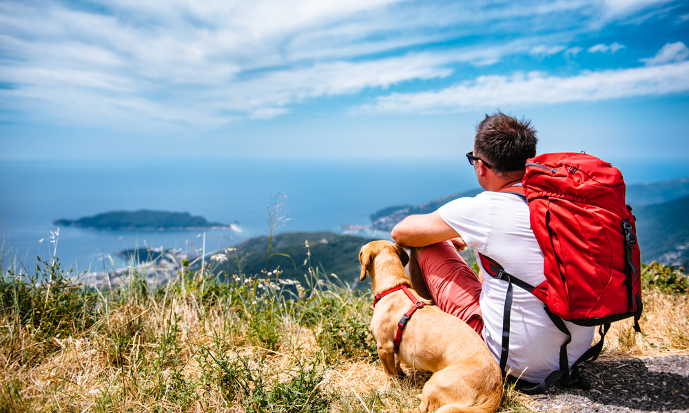 Happy trails, happy tails: Tips for safe hiking with your dog