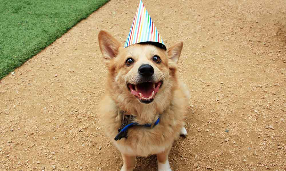Dog birthday party: A paw-some way to celebrate life with dogs