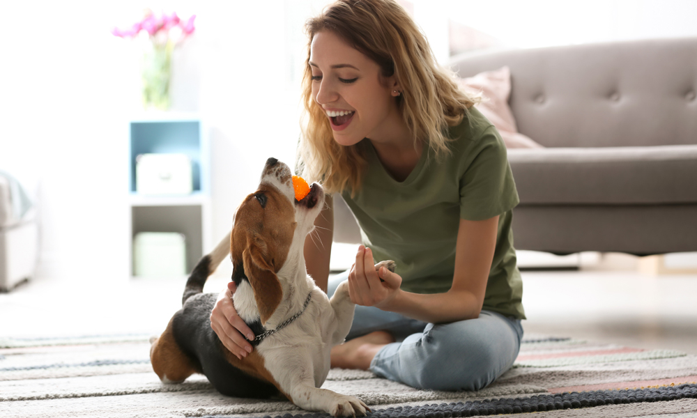 Does your dog love you? Here's how you can tell