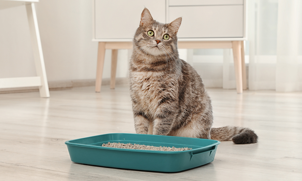 photo of cat standing next to litter box