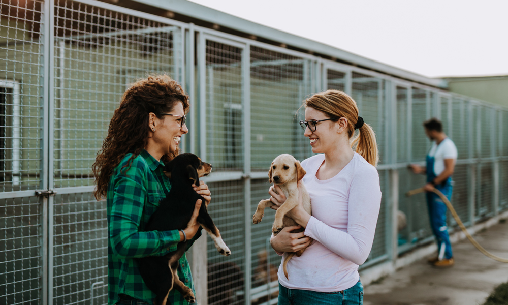 Doing good: Heartfelt ideas to give back to animal organizations in your town