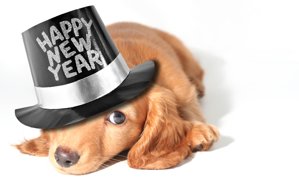 "puppy wearing ""Happy New Year"" hat"